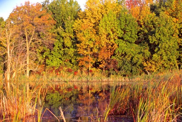 trees on the Horicon Marsh in fall colors