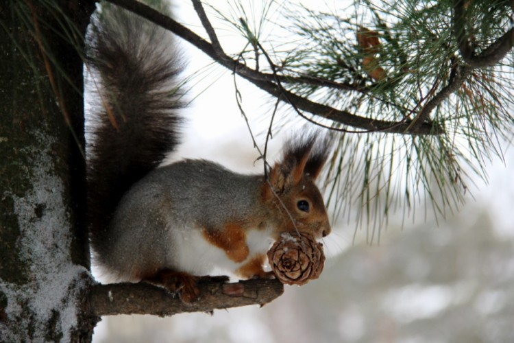 squirrel-in-tree-with-acorn